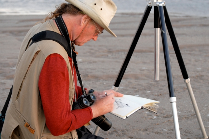 JCP sketching Elegant Terns- SW photo_Web