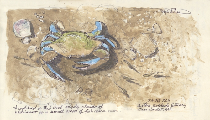 Journal pg. blue-legged crab  102511