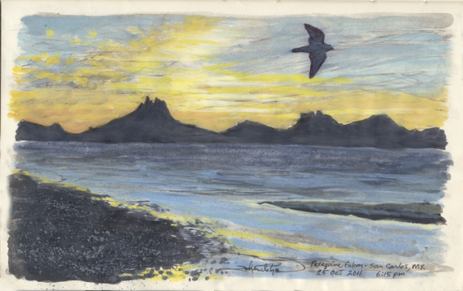 Journal pg. Peregrine sunset  10-25-11